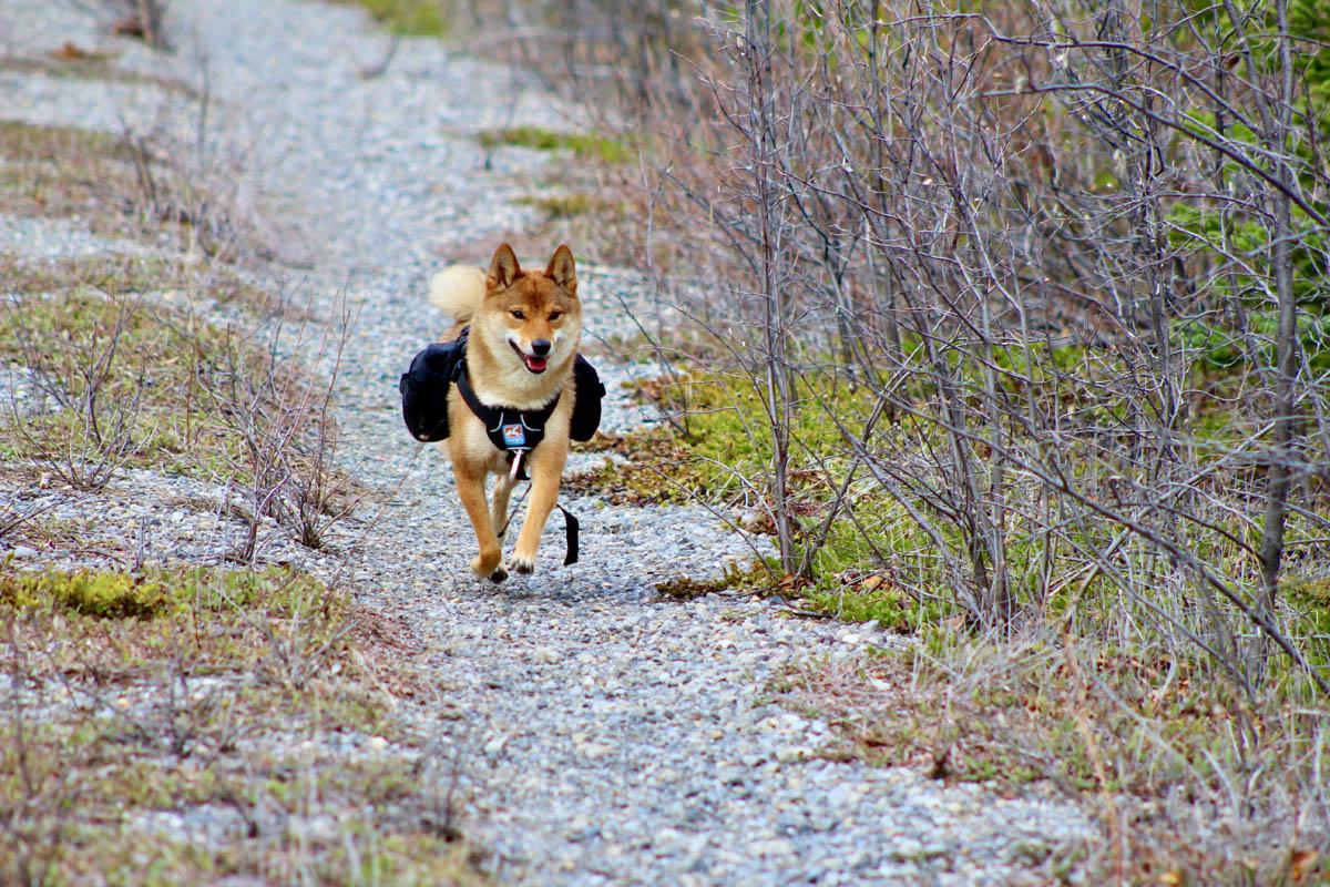 Odlo construit sa team de trail running