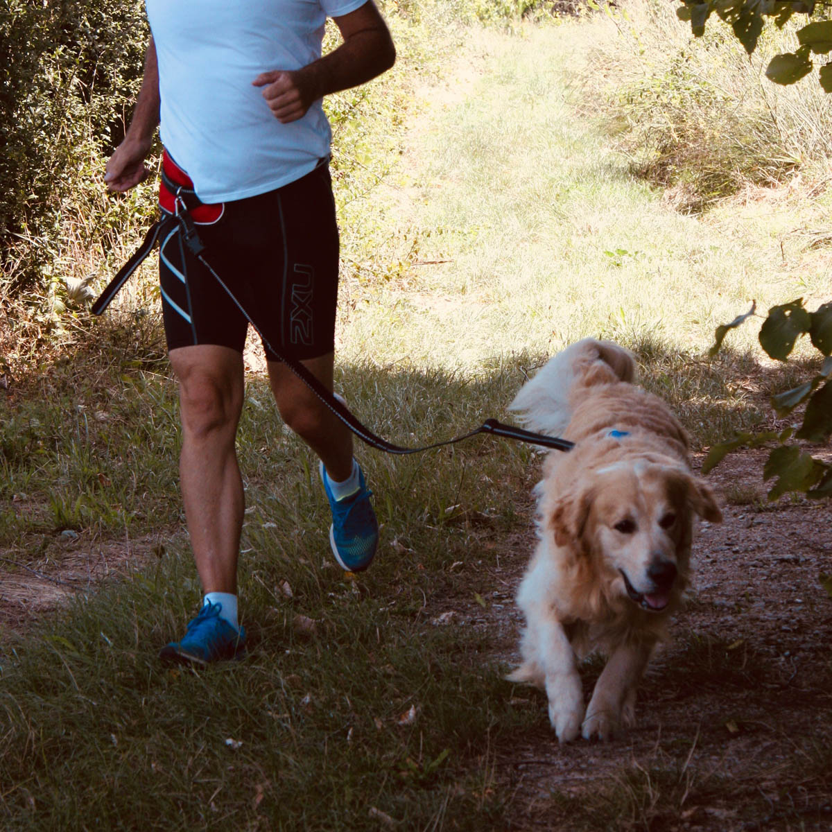 Icepeak harnais Prozone Super ceinture baudrier CaniCross Jogging