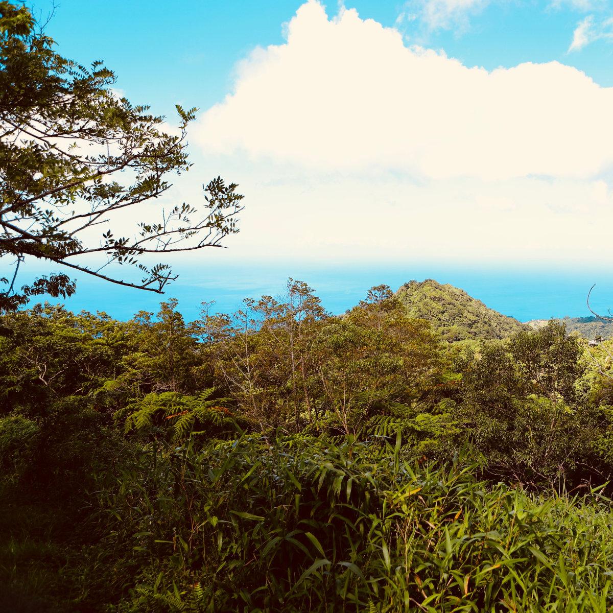 Raid des Alizés – Martinique