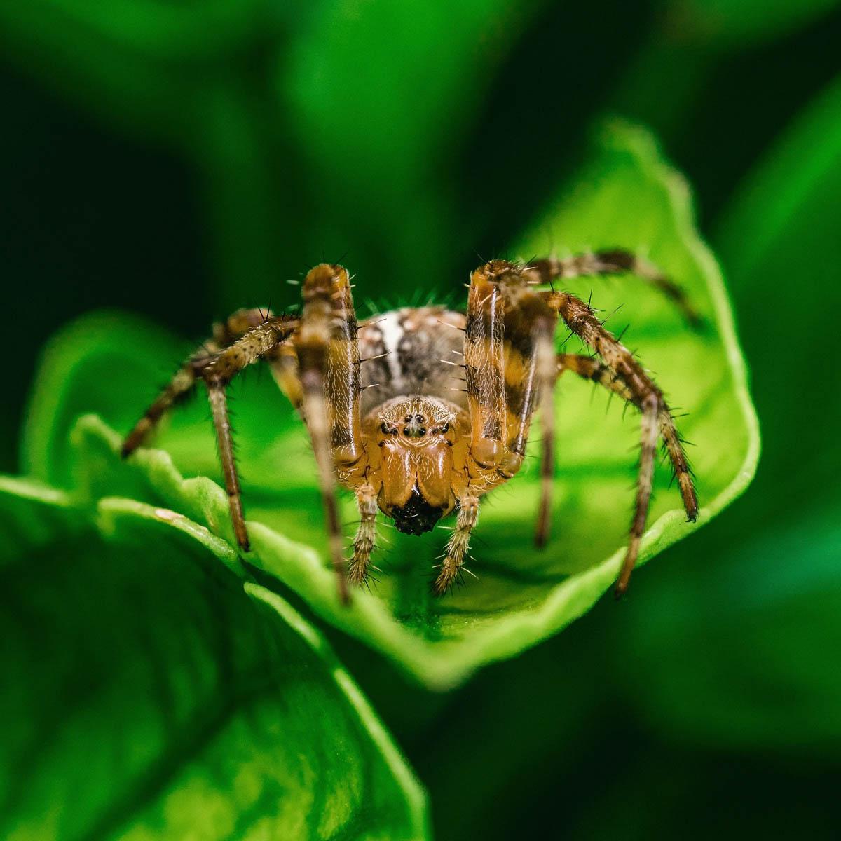 Les premiers tissus en soie d'araignée sont là