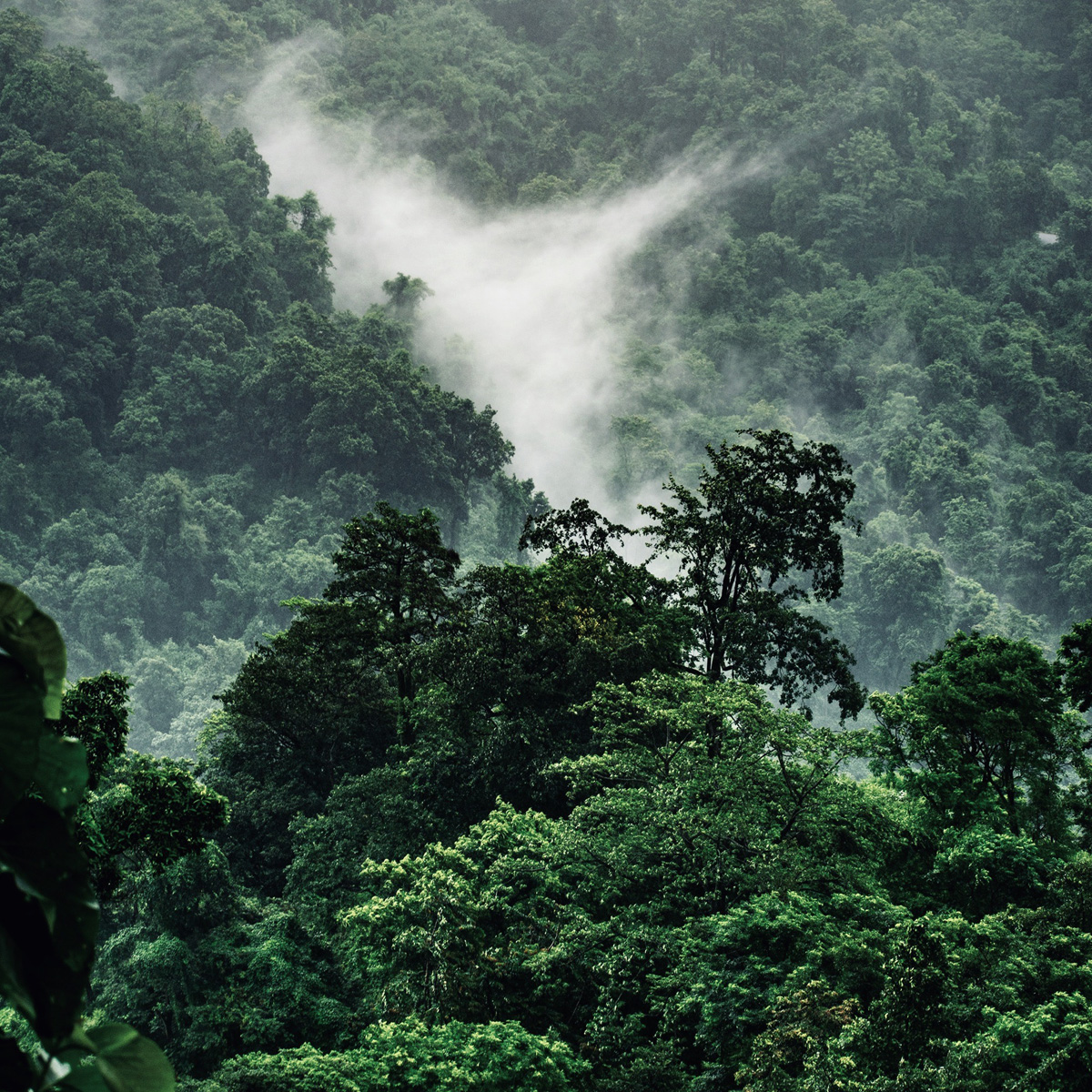 Escape from the jungle
