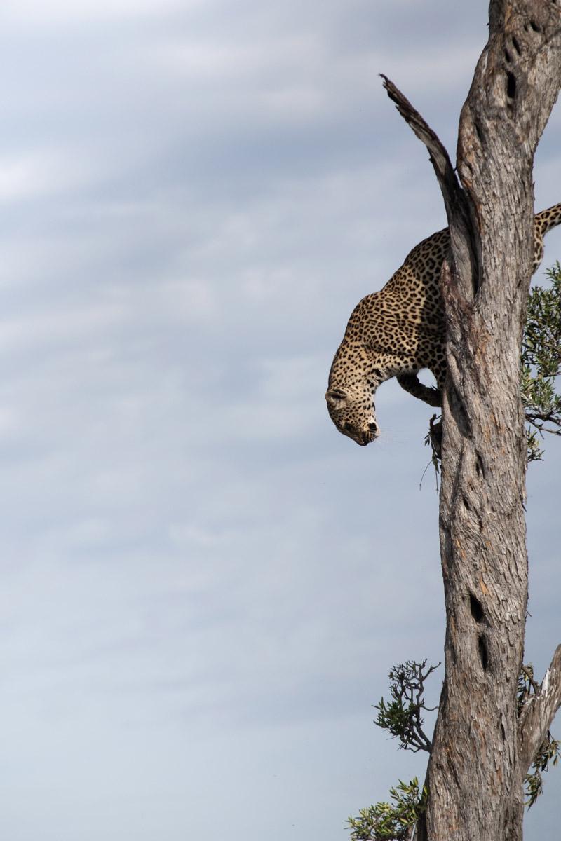 Comment naissent les champions. Coup de projecteur au Kenya.